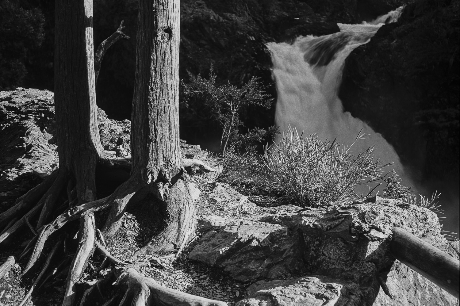 Waterfall and treetrunks, Bariloche - 1976