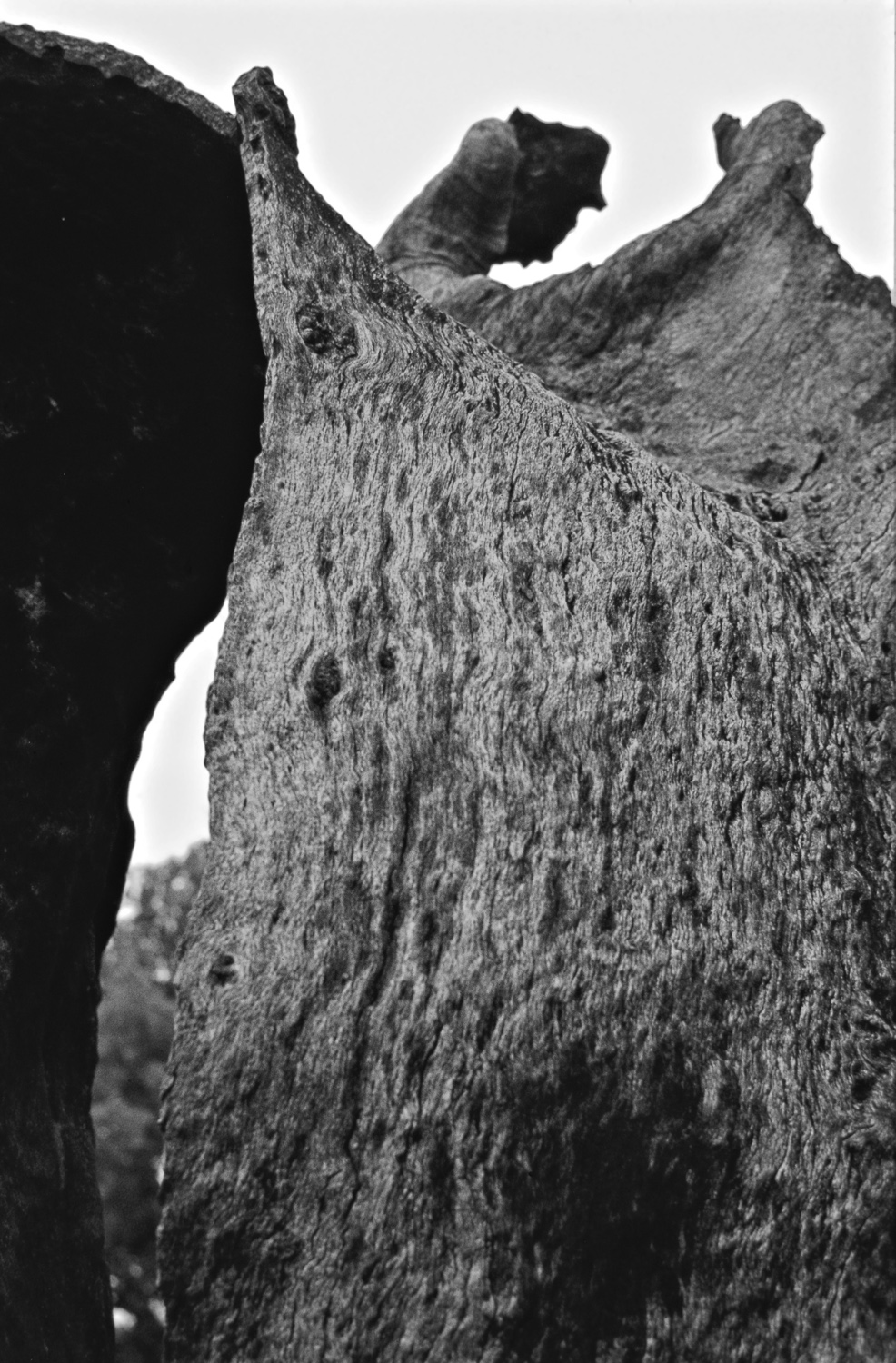 Burnt tree trunk - Hurshat Tal, 1977