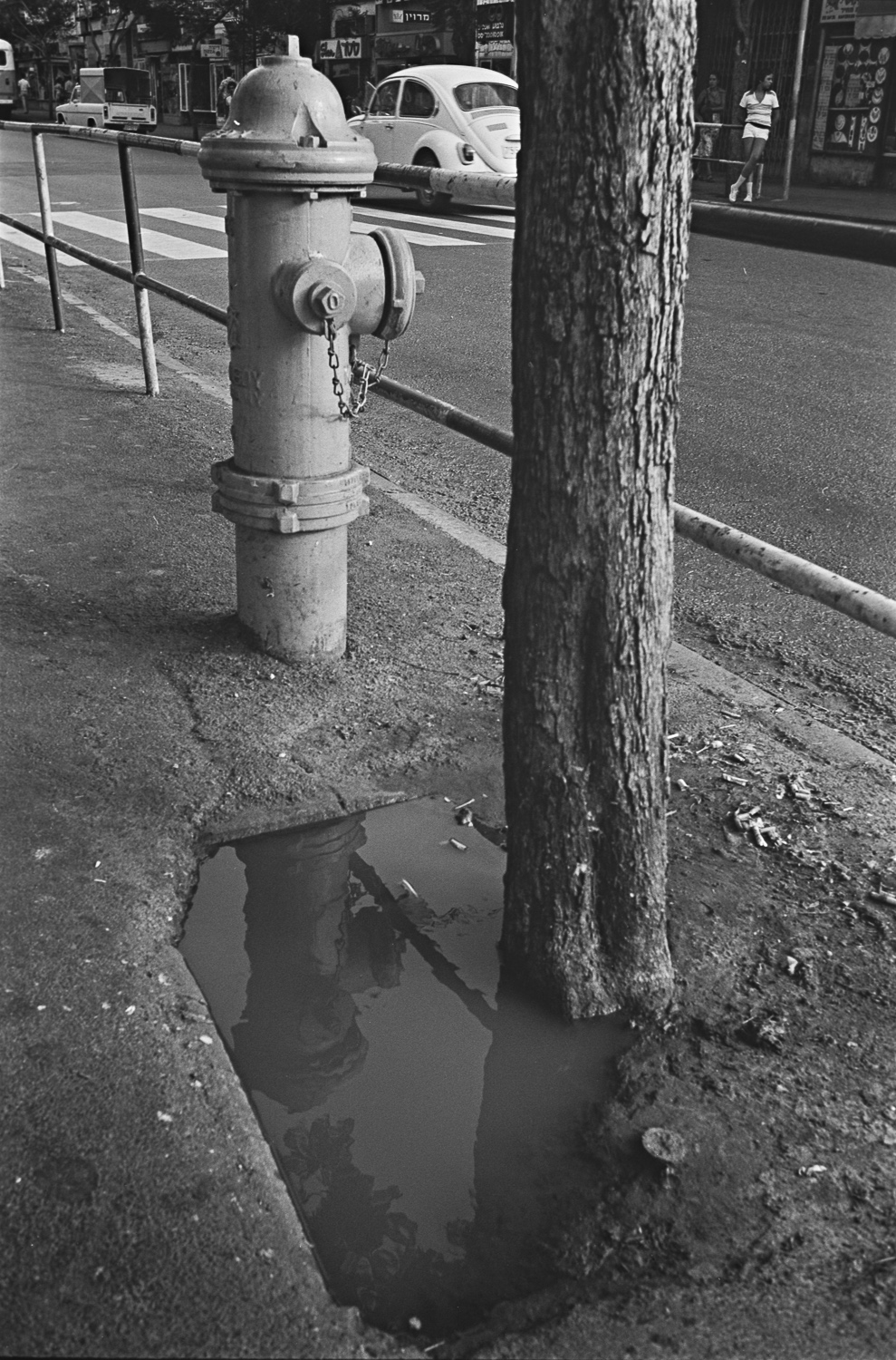 Fire Hydrant and Tree - Haifa,1977