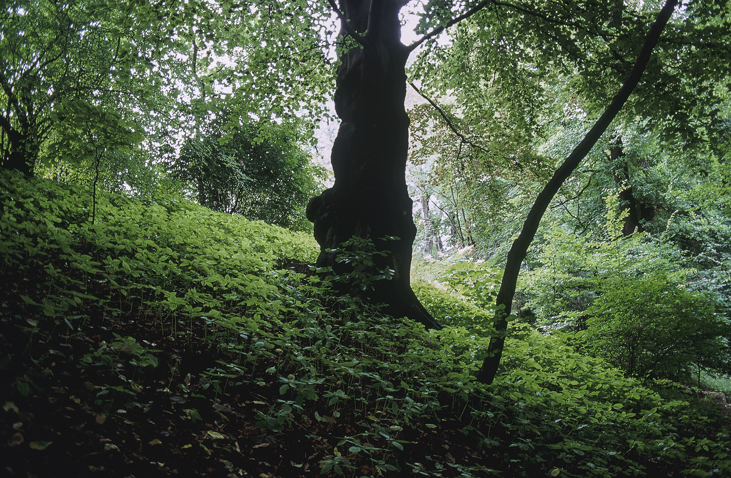 Tree - Hamburg, 1994