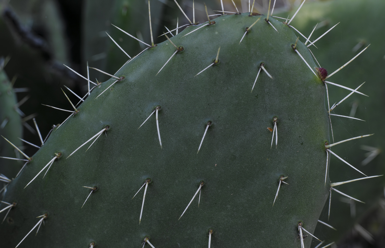 Cactus - Bet Guvrin, 2009