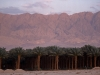 Date Palms under Moab - Arava, 1997