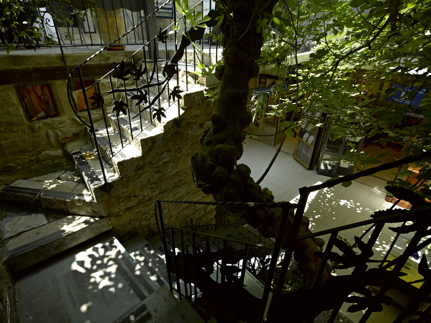 Figtree and stairway - Tzfat, 2012