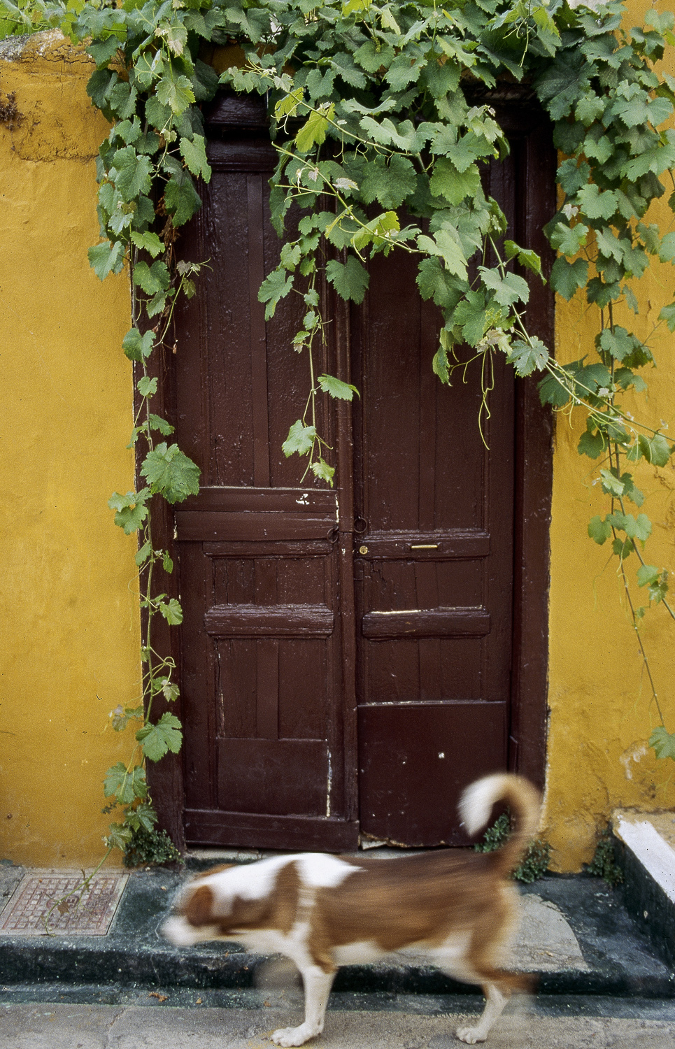 Dog and door - Athens, 1995