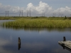 Wetlands - Everglades, Florida, 2007