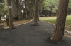 Path and trees - Technion, 2010
