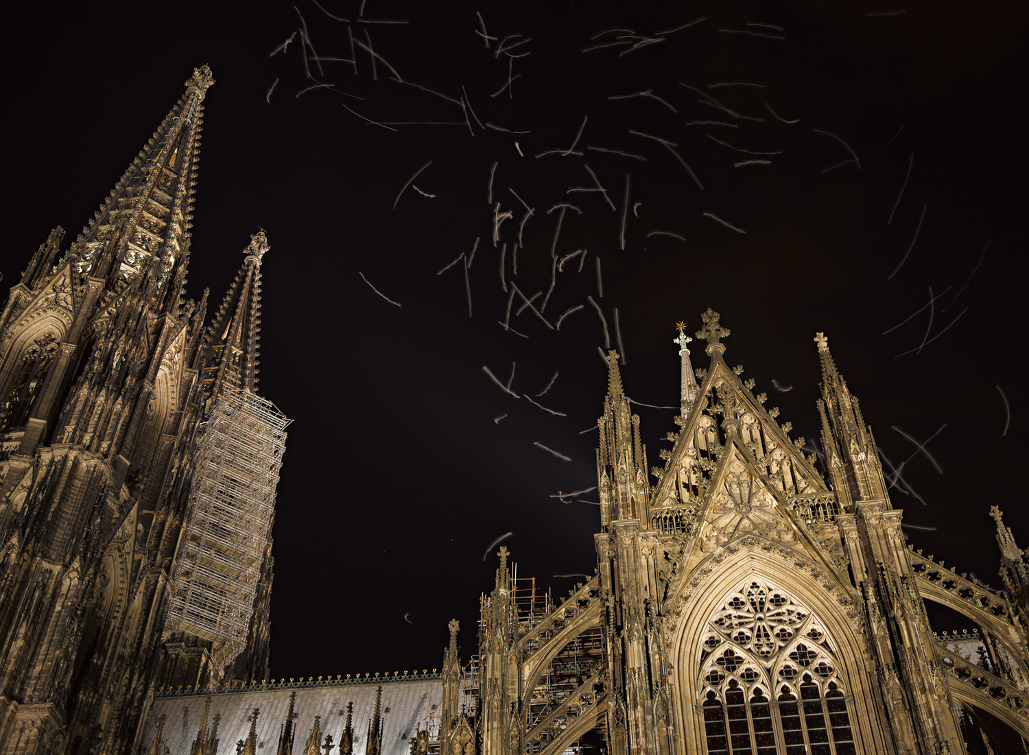 Gulls - Dom Cathedral, 2012